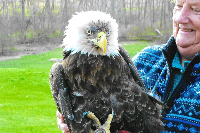 American Bald Eagle Rescue